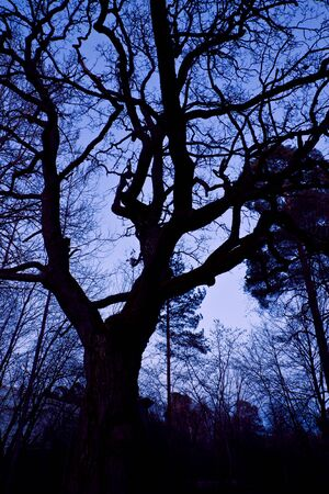 twisted branches of trees at night against blue and purple sky