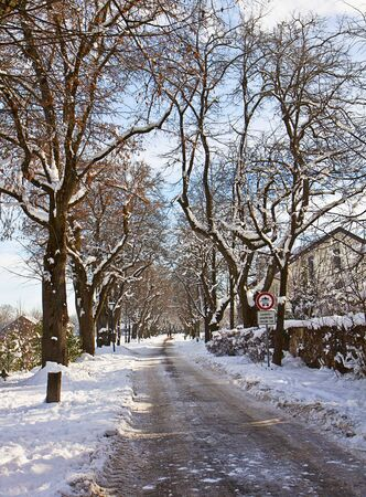 flanked: Winter Bavarian landscape, alley flanked by high trees with snow