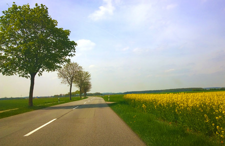 flanked: Springtime in Bavaria, country road flanked by yellow field of canola plantation
