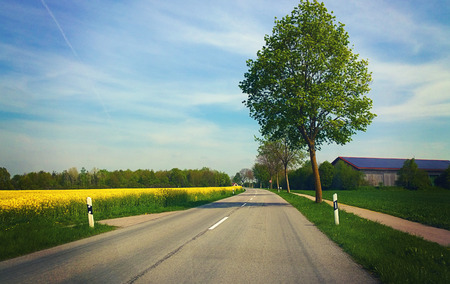flanked: Springtime in Bavaria, country road flanked by yellow field of canola cultivation