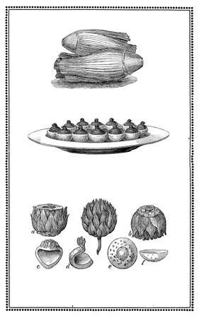 Engravings of little venison, vegetables and table presentations and articholes in section. My elaboration of engravings fromSueddeutsche Kueche by Katharina Prato - Verlagbuchhandlung Styria, 1913, author unidentified. Stock Photo