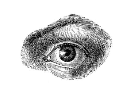 eye drawing: Anatomy - human eye, vintage engraving