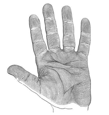 imagine a science: Human hand, palm Stock Photo