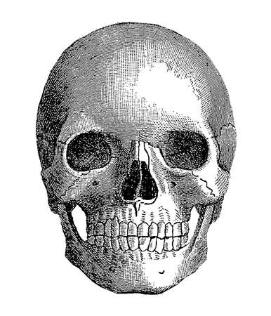 hollow body: Anatomy - human skull, vintage engraving