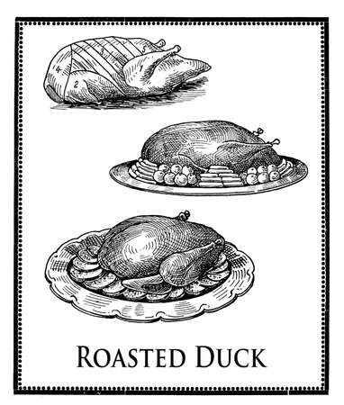 vintage food engravings collage, roasted duck cuts, roasted duck preparation and presentation Stock Photo