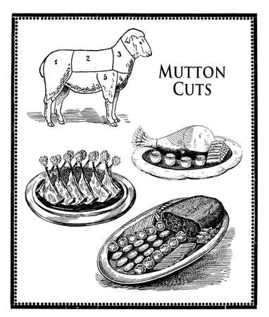 engravings: vintage food engravings collage, mutton numbered cuts,back, leg and ribs  presentation