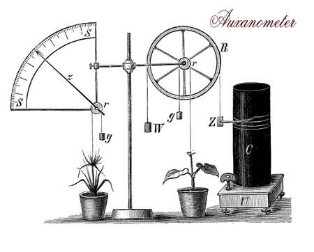 specie: XIX century illustration describing the auxanometer, apparatus for measuring the growth of plants,a wire is fixed to the the plant apex on one end and a dead-weight on the other. As the plant grows, the pulley rotates and the pointer moves on a circular s Stock Photo