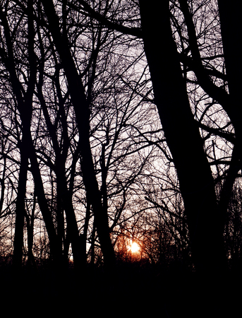 back light: Back light, sunset in the wood, red sun through dark branches