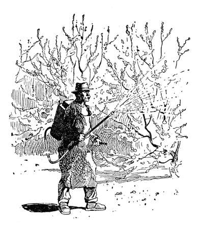 engravings: Horticulture illustration - farmer sprays Bordeaux mixture on fruit trees in orchard. Bordeaux mixture is a mixture of copper sulfate (CuSO4) and slaked lime (Ca (OH) 2) and is used in vineyards, fruit-farms and gardens to prevent infestations.