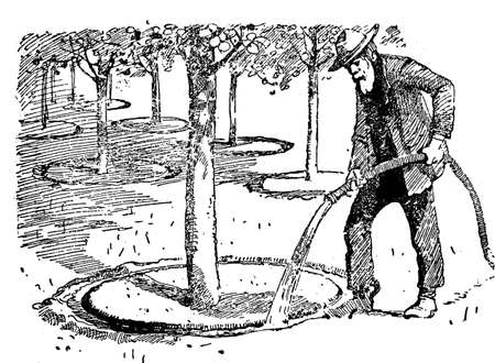 arboreal: Horticulture illustration - farmer watering fruit trees in orchard Stock Photo