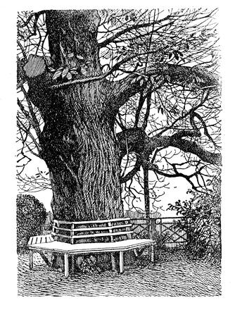 ornamental garden: Gardens - illustration of wooden bench around a big tree trunck in ornamental garden