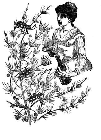 woman gardening: Gardening vintage illustration, woman takes care of larvae and bugs from a tree, picking them with a funnel and a bottle