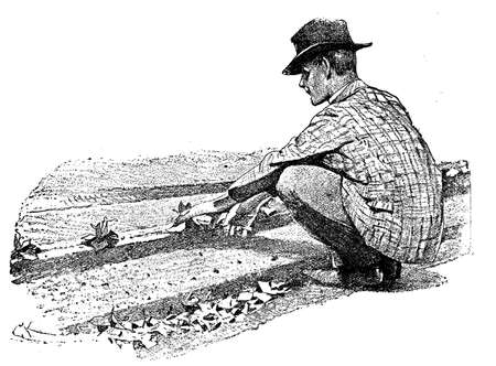Horticulture illustration - farmer hand sowing plants in prepared soil tracks