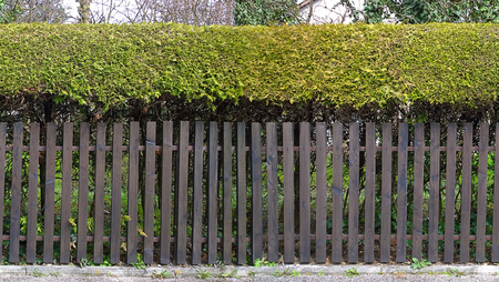paling: HD seamless horizontal texture, wooden fence topped by bushes