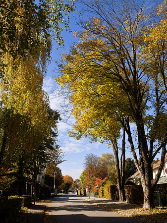 Bavaria, residential urban street flanked by high trees with golden leaves in autumn time