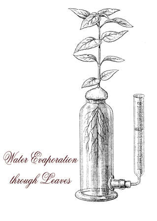 transpiration: Plant transpiration is a process of water evaporation through leaf pores. Plants absorb water from the root to the leaves  by capillarity and by water potential difference.