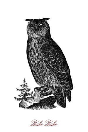 The Eurasian eagle-owl (Bubo bubo) is  one of the largest species of owl. For millennia it has been regarded as a symbol of wisdom. Stock Photo