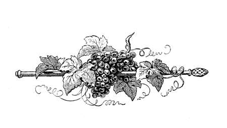 Typographic decorative staff with grapes and vine leaves, vintage engraving