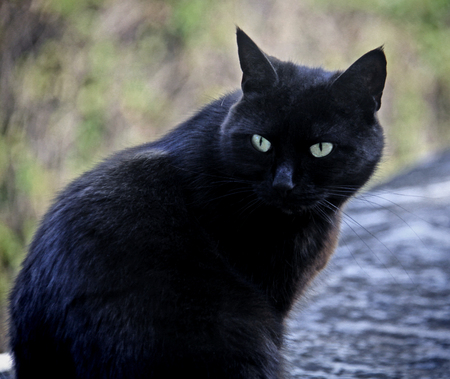 Black male cat with green eyes portrait