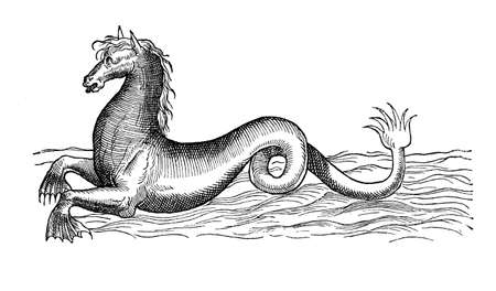 Sea horse, mythological marine creature, year 1580, vintage engraving