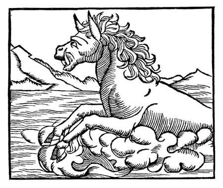 Sea monster, sea hippopotamus, medieval engraving, year 1550