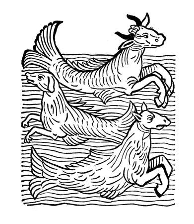 Fantastic sea monsters; sea cow, sea dog, sea horse, medieval engraving year 1491 Stock Photo