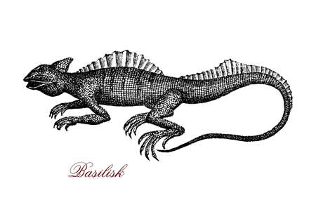 Engraving portrait of common basilisk, known also as  Jesus Christ lizard for its ability to run on the water surface. It lives in tropical rain forest of South America and has  a fin-like crests down its back Stock Photo