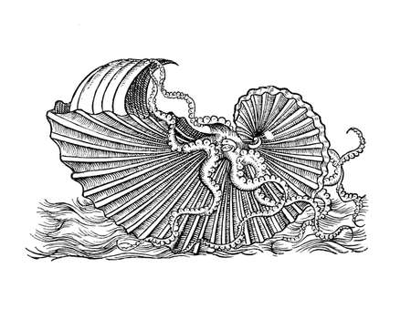 Vintage illustration of Augonauta Argo, octopus with eggcase shell and unclamped sail, year 1580 engraving Stock Photo