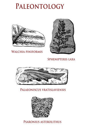 vintage paleontology  illustration of fossilized plants and animals: walchia piniformis, sphenipterix laxa, palaeoniscus vratislaviensis and pasaronius asterolithus