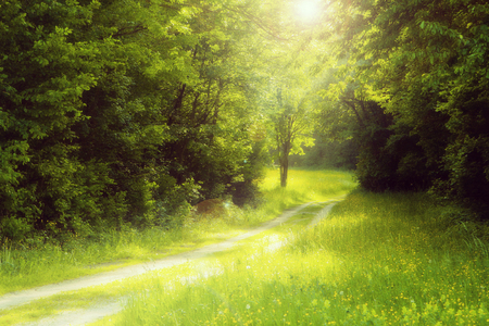 path in the woods with glowing sunlight, soft focus Stock Photo