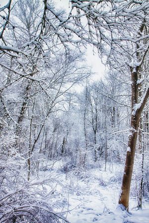 Fairy tale winter landscape framed by frosty branches, forest in snow with sunshine glow