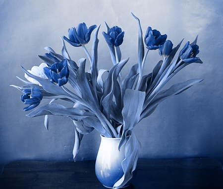 Vase with bouquet of  tulips, filtered in blue, soft focus