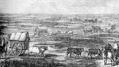 Caravans with cattle through the South America pampas lowlands, vintage engraving