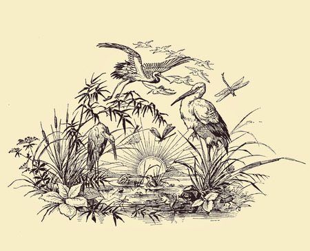 Vintage typography, beautiful   chapter endpiece decoration, vignette with rising sun, herons, spring flowers, pond,aquatic plants and frogs