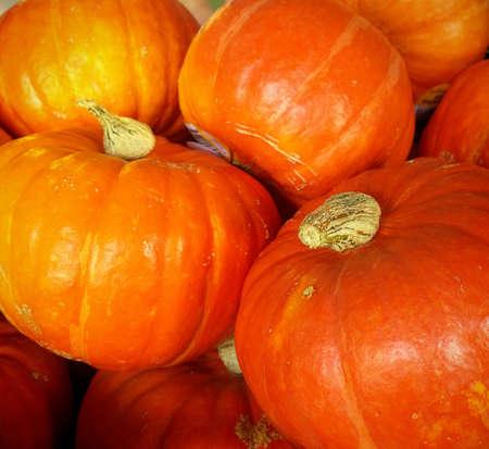 Autumnal background: red orange Hokkaido pumpkins Archivio Fotografico