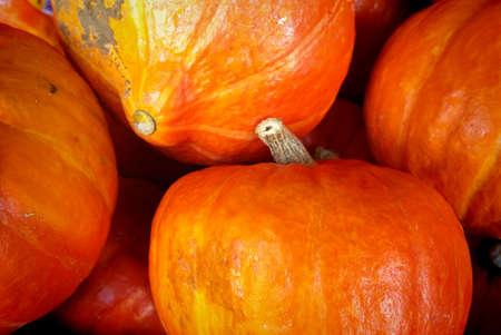 Autumn background: red orange Hokkaido pumpkins