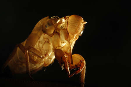 molted: Cicada molted Stock Photo