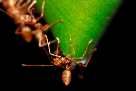 duty: weaver ant on duty