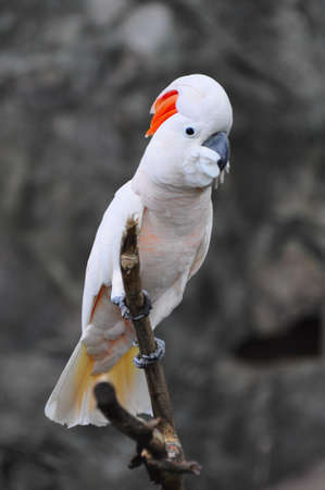 A cockatoo bird in a branch of tree
