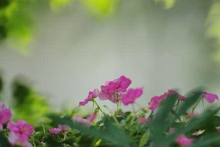 Closeup of pink flower macro