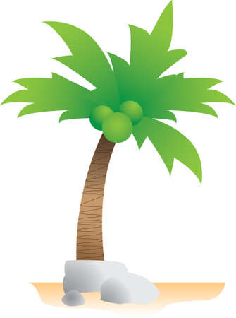 Coconut with rocks Vector