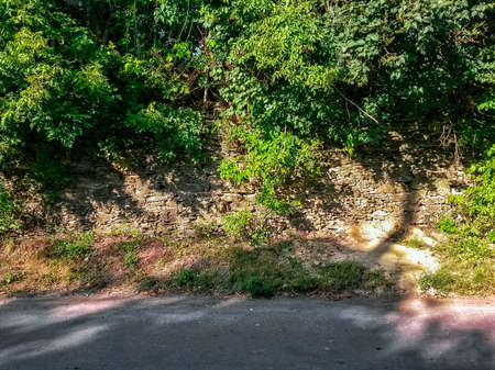 An old stone wall overgrown with green bushes and trees in front of an asphalt road Фото со стока