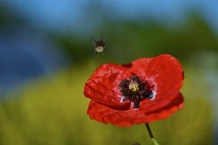 nectar: Collect nectar
