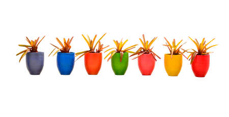 Many color jardiniere on white background, clipping path photo