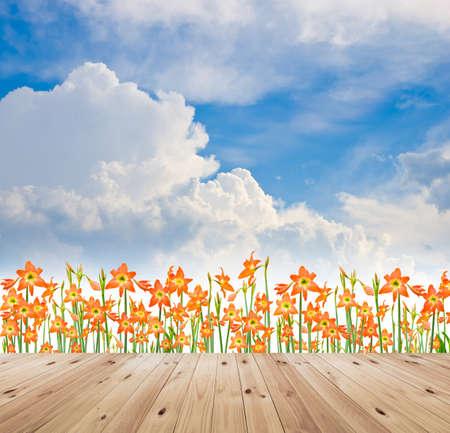 hippeastrum flower: Hippeastrum flower and  wood bridge on blue sky background