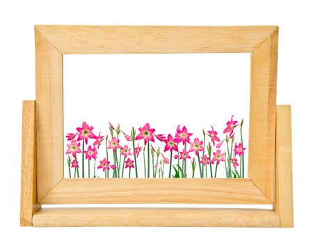 hippeastrum flower: Hippeastrum flower in frame photo