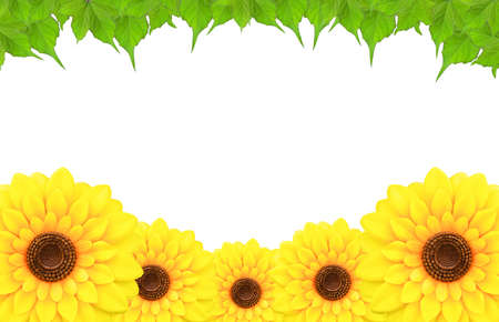 frameof sunflowers and leaf around a blank white space. photo