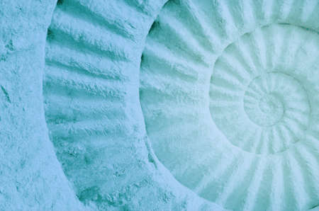 fossilized: Color of ammonite prehistoric fossil, abstract background.