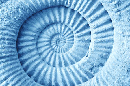 Abstract blue made from Ammonite prehistoric fossil on the surface