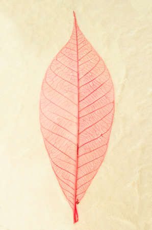natural paper: Natural paper structure made from dried leaves. recycle paper concept. Stock Photo